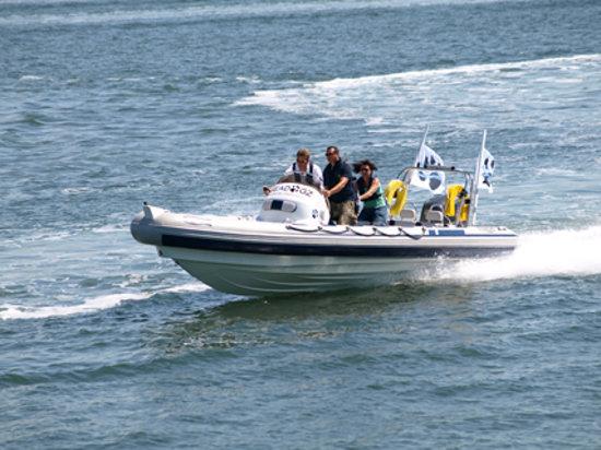 Seadogz Rib Charter Limited: Seadogz Rib