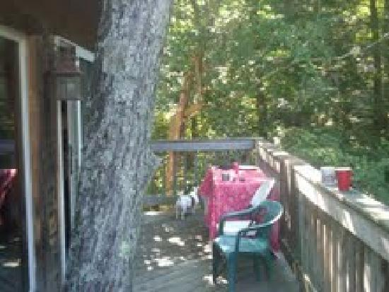 Martinville Streamside Cottages: Our Deck on the Treetop