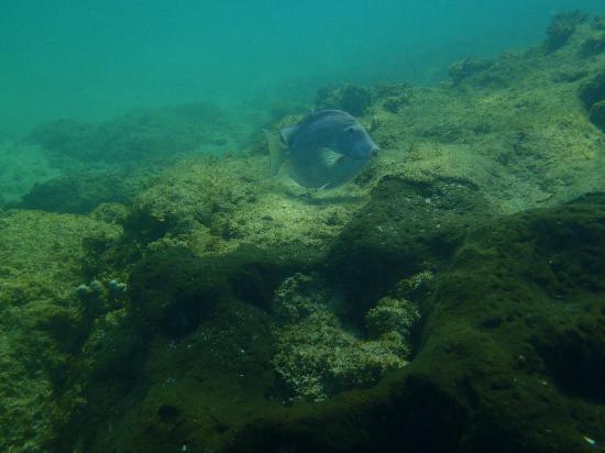 Aqua Adventure : Swimming with the fishies, 15 feet deep.