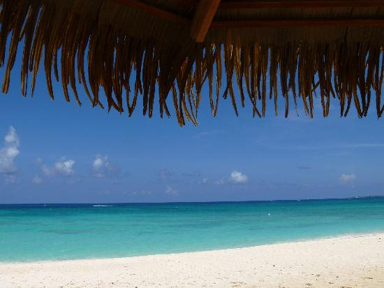Caribbean Club : View from our shaded, thatch umbrella!