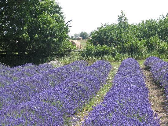 Prince Edward County Lavender: Gorgeous setting