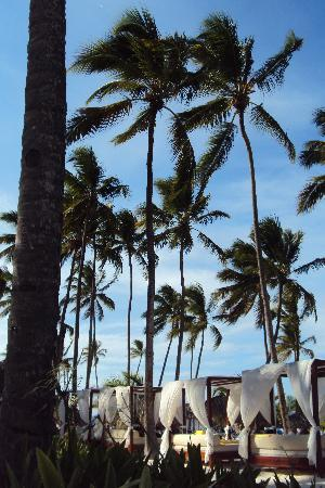 Dreams Palm Beach Punta Cana: preferred area