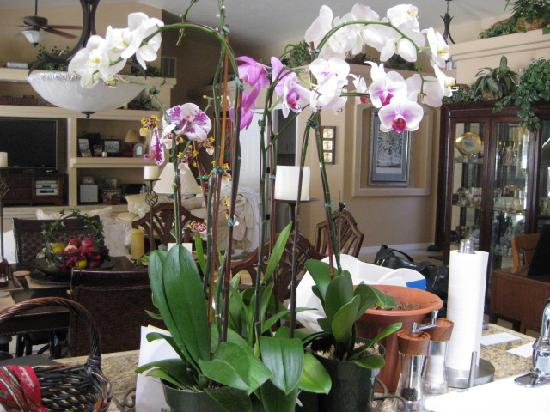 Always Inn San Clemente B&B: My Orchid Garden