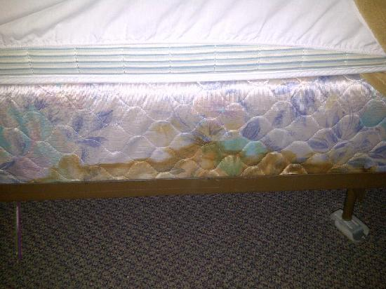 Oaks Inn Hotel, Banquet & Convention Center : Nasty boxspring in Room 134