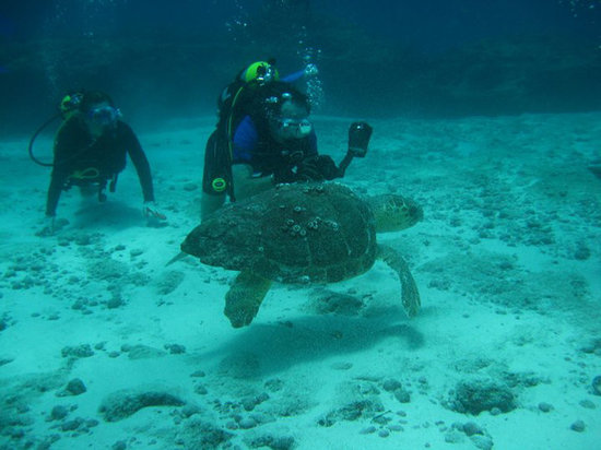 Diving Isla Mexico Review Of Sea Hawk Divers Tripadvisor