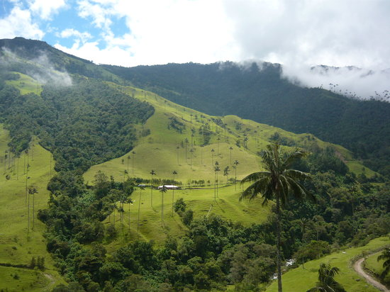 Salento, Colombia: valle de cocora