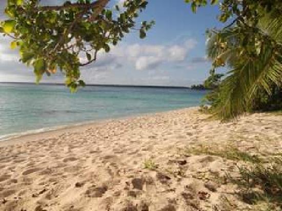 Matafonua Lodge: The beach