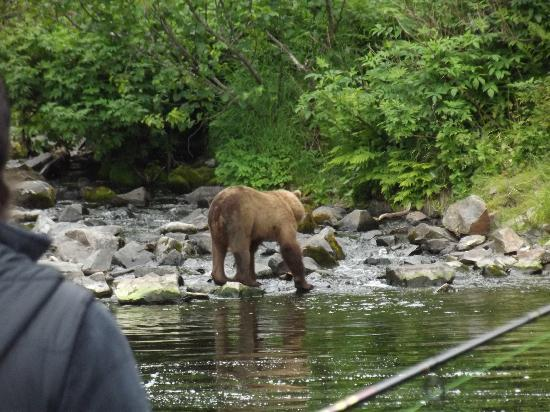 Alaska Funny Moose: Bears decided to fish ith us :)