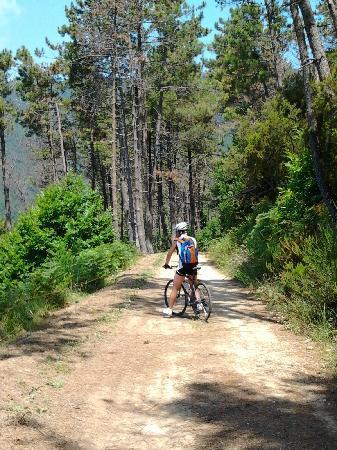 Casa di Campagna La Scortica: percorsi in bici