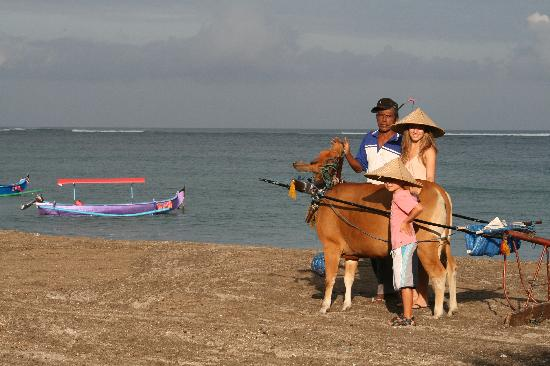 The Patra Bali Resort & Villas: beach at Patra being cleared by cow each morning