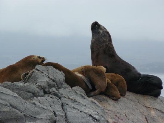 Ushuaia Bay: La isla de los Lobos