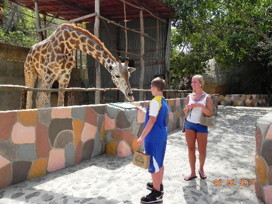 Buganvilias Vacation Club: Fun at the Zoo