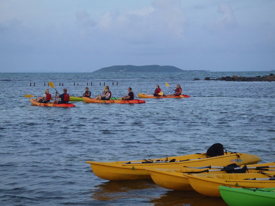 Canovanas, Puerto Rico: Start off the shore, through the mangrove-lined channel, to the bay.