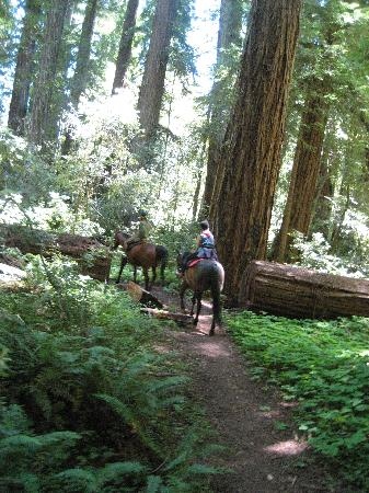 Blackbird Farm: redwoods