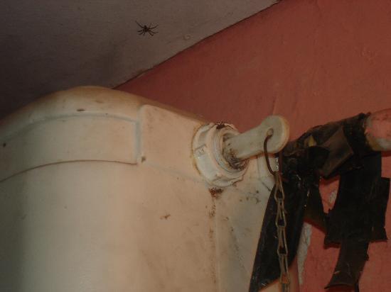 El Puesto Hostel: Araña en la mochila del inodoro