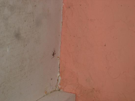El Puesto Hostel: Araña en la habitación