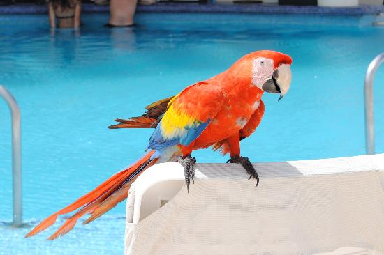 Live Aqua Cancun All Inclusive: One of the Resort Pets