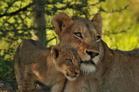 Inyati Private Game Reserve, Νότια Αφρική: Lioness - Keith Jenkinson