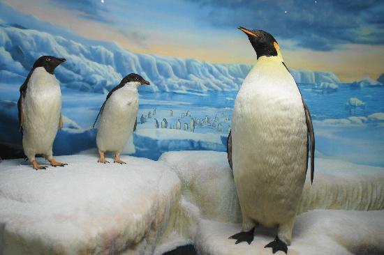 International Wildlife Museum These Penguins Look So Real