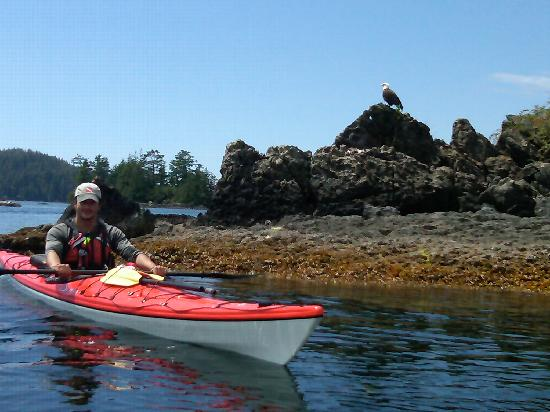 Black Bear Kayaking : JT gets us up close and personal with a Bald Eagle
