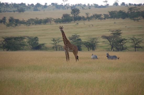 Serengeti Bushtops Camp : The Seregetti plains