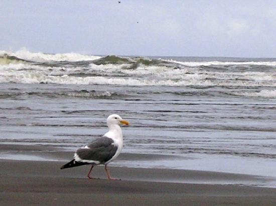 Long Beach, WA: Beach