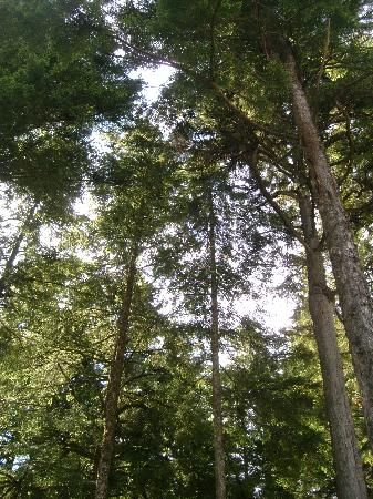 Glacier Gardens Rainforest Adventure: plenty of trees