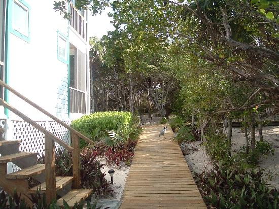 Dolphin Beach Resort : Resorts grounds