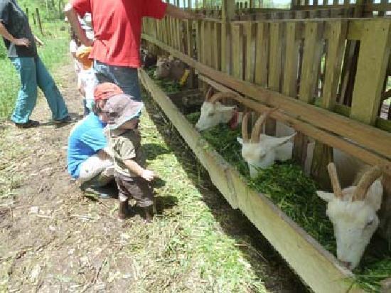 Hacienda Monte Claro: les chèvres