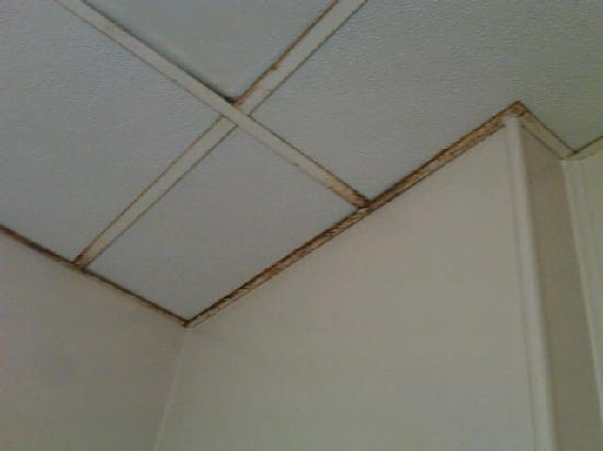 The Admiral Motel: water damage ceiling