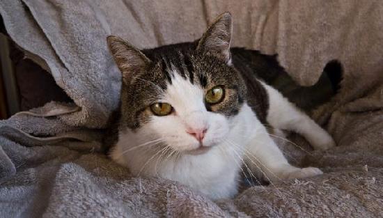 B&B Navigatori: our cat Papo