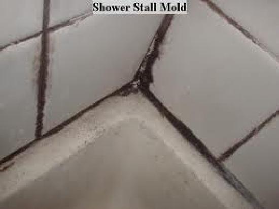 Flamingo Motel & Suites: Bathroom Mold