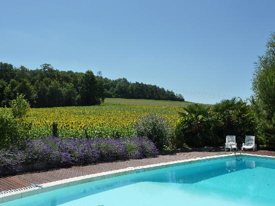Le Petit Roc swimming pool and sunflowers