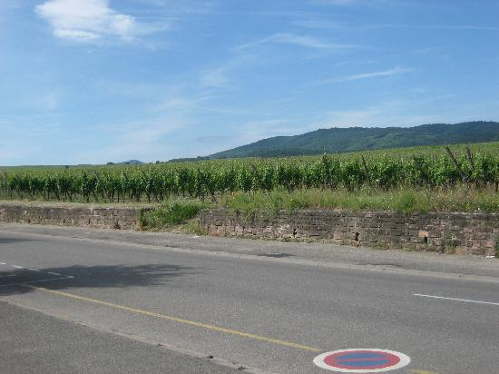 Ribeauville, Prancis: Wine Route of Alsace