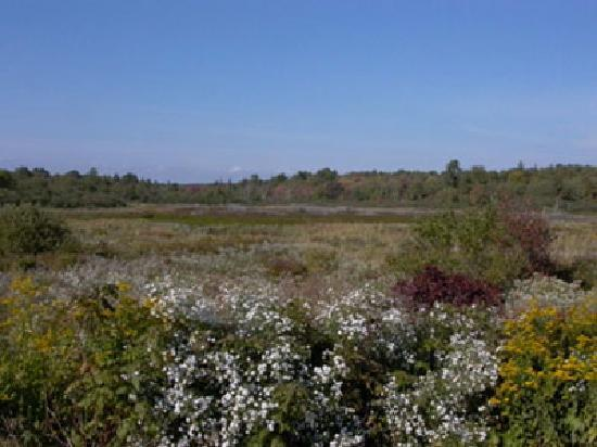 Blue Skye Farm: Summer view of the marsh
