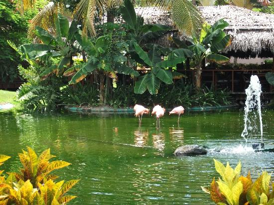 Natura Park Beach - EcoResort & Spa: Pretty Flamingoes