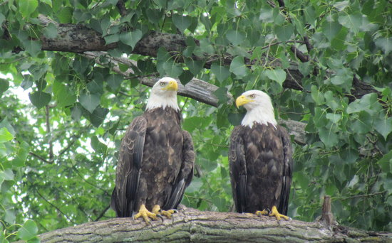 Rusty's Red Wing River Rides: One Eagle couple