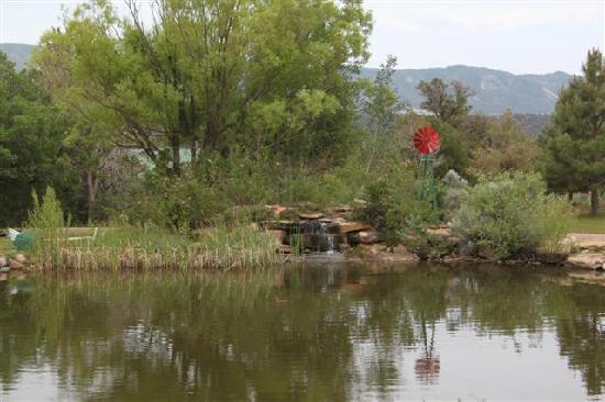 Sundance Bear Lodge : Tranquil fish pond