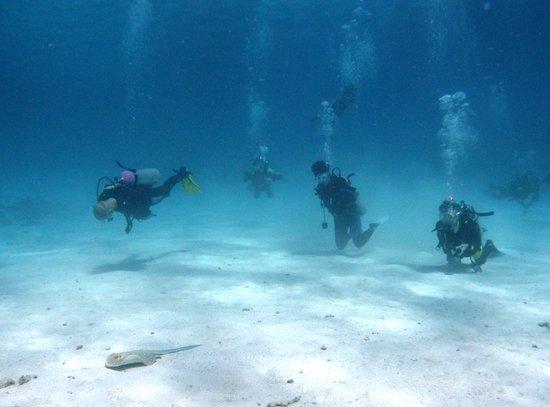 Red Sea Scuba Academy : plongée Hurghada