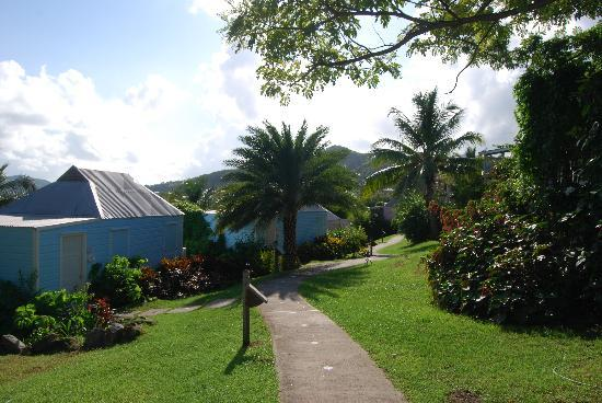 Cocobay Resort: the is what the grounds look like