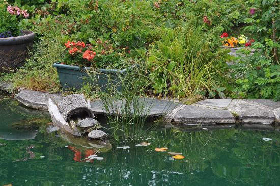 A Hidden Haven Bed and Breakfast: A koi and turtle pond by the main house
