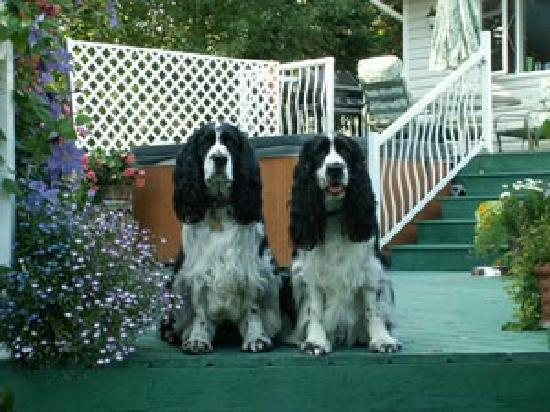 Arbor Bed and Breakfast: Oliver and Shadow the official Greeters