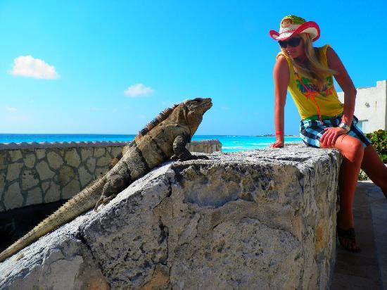 Oleo Cancun Playa: There are lots of Iguanas in Mexico