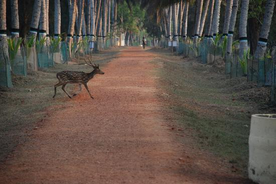 Bhitar Kanika National Park: Nature Trail