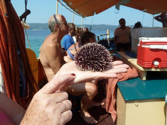 Ionian Discoveries : Close Encounters!