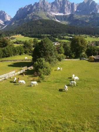 Гоинг, Австрия: Blick vom Balkon auf die Pferdeweide