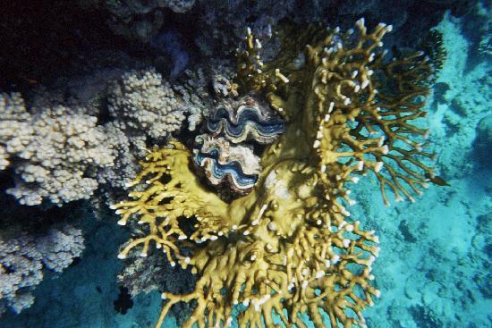 Masseria Tenuta Quintino: reef