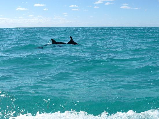 Sian Ka'an Biosphere Reserve: Wild Dolphins - Sian Ka'an