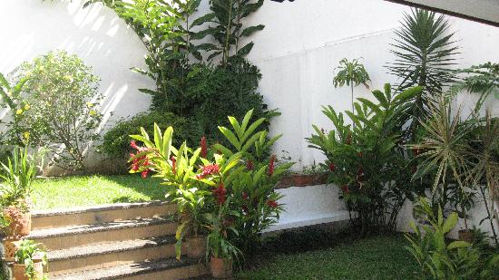 Casa Laurin B&B: Garden filled with tropical plants