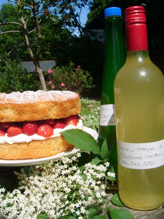 Ilfracombe, UK: Homemade lemon, orange and elderflower cordial made from elderflowers that grow at the mill and